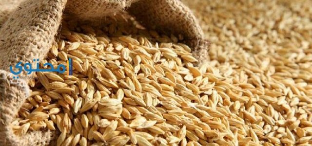 تفسير رؤية الحنطة فى المنام بالتفصيل