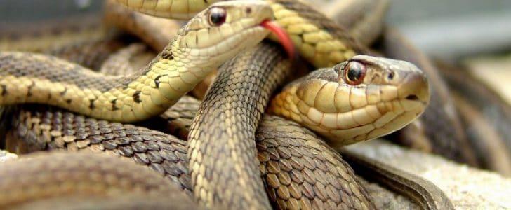 تفسير حلم رؤية الثعابين فى المنام
