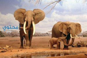 تفسير رؤية الفيل فى المنام بالتفصيل