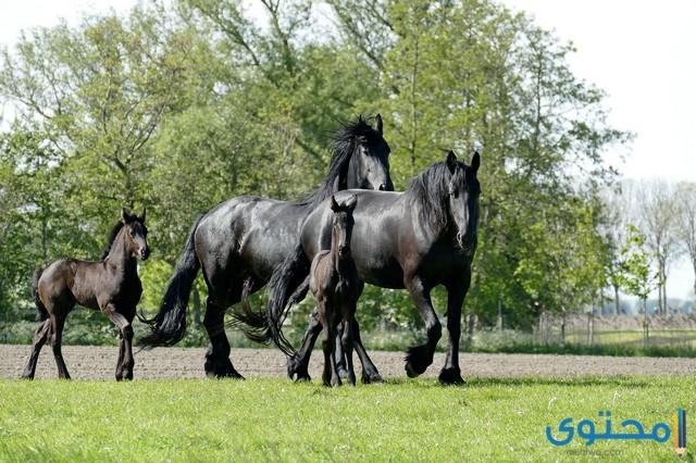 اجمل خيول العالم