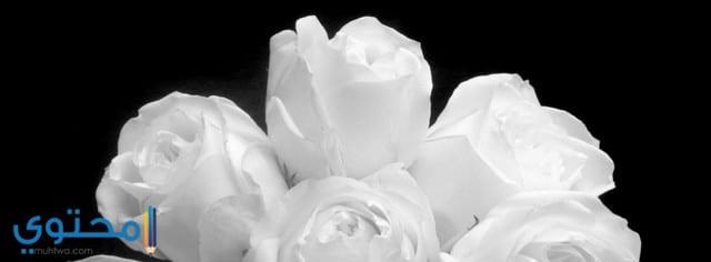 صور خلفيات وكفرات ورود وأزهار للفيس بوك 2021 - موقع محتوى