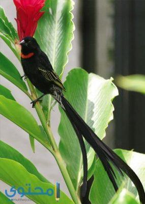 صور طيور جميلة