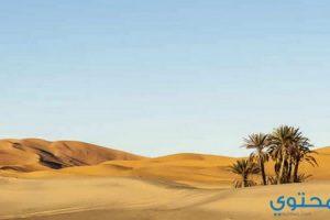 تفسير المشي في الصحراء بالمنام