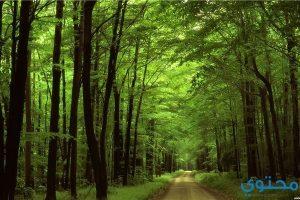 معنى حلم الغابة في المنام