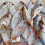 معني رؤية السمك في الحلم