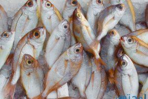 معني رؤية السمك في المنام بالتفصيل
