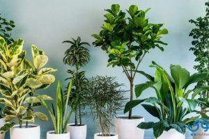 تفسير رؤية نباتات الزينة في المنام للعصيمي
