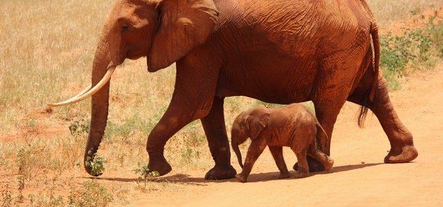 تفسير حلم الفيل في المنام لابن سيرين