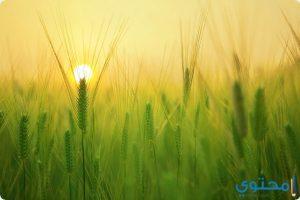 معني رؤية الزراعة في المنام