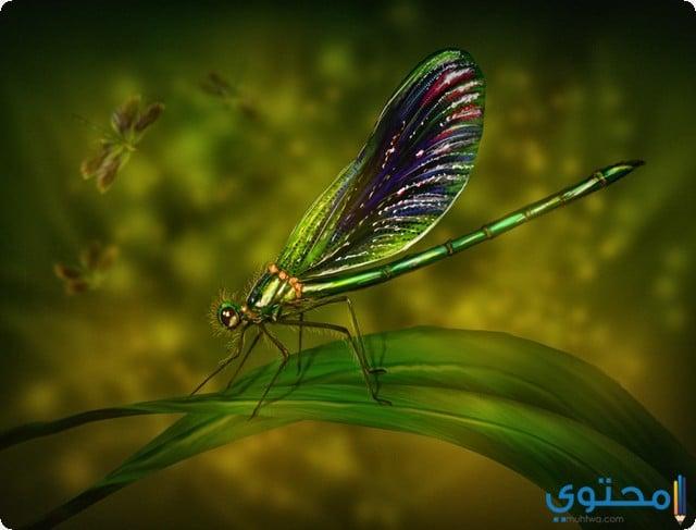 تفسير رؤية الحشرات
