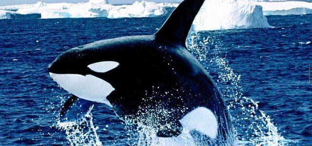 تفسير حلم الحوت في المنام