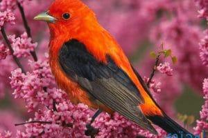 تفسير رؤية الطيور في المنام