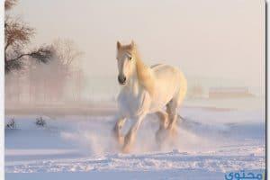 تفسير رؤية الحصان في الحلم