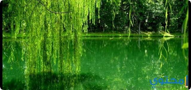 حلم اللون الاخضر