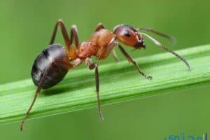 معنى رؤية النمل في المنام