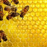 تفسير النحل في المنام