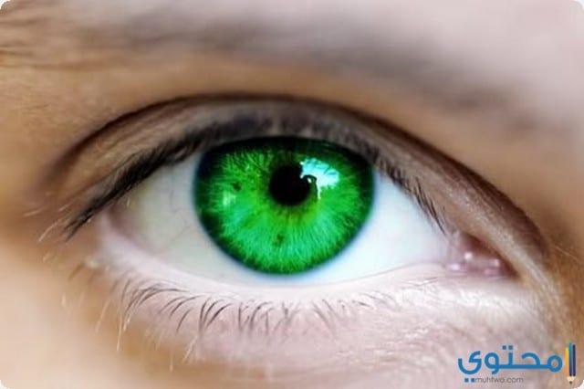 تفسير رؤية العيون في المنام