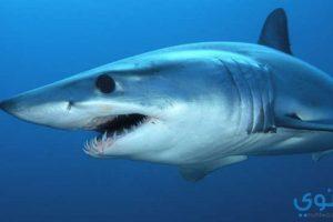 تفسير رؤية القرش في المنام