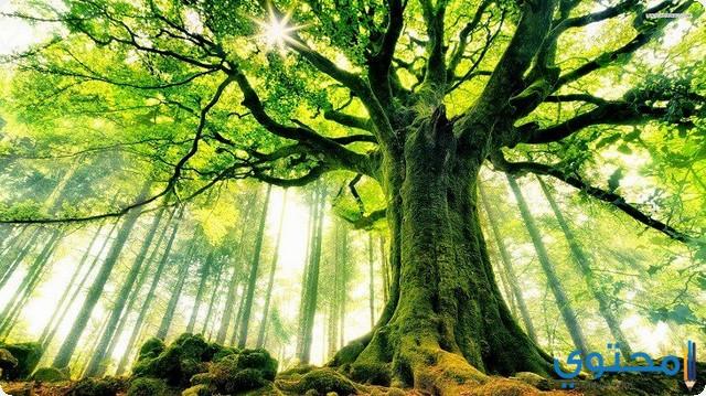 الأشجار في المنام