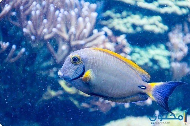 رؤية السمك في الحلم