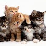 تفسير حلم القط للعزباء