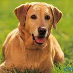 تفسير رؤية نباح الكلب في المنام