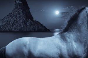 معني رؤية الحصان في الحلم