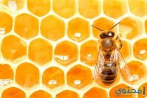 معنى حلم عسل النحل في المنام