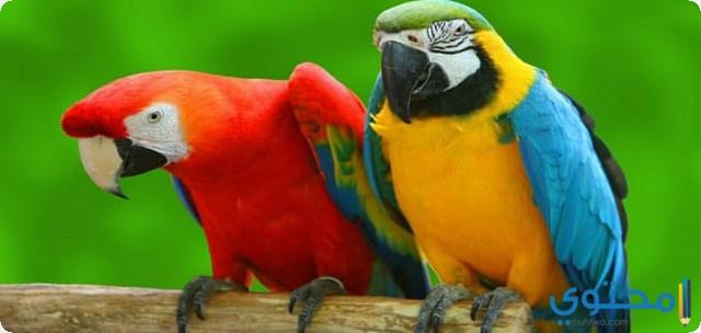 الطيور في المنام