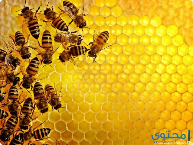 معني عسل النحل