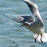تفسير رؤية طيور النورس في المنام