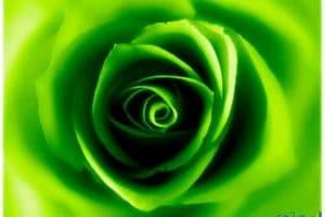 تفسير رؤية اللون الأخضر في المنام