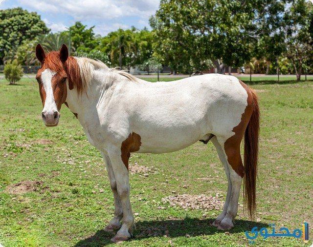 رؤية الحصان في الحلم