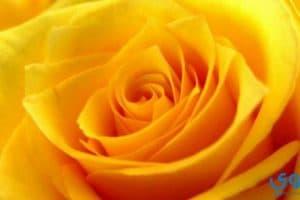 تفسير اللون الأصفر في المنام