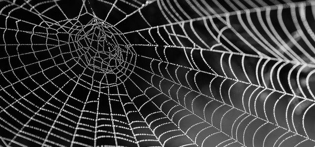 رؤية حلم العنكبوت الأسود في المنام