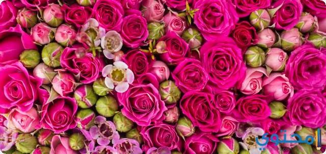 حلم الورود والزهور