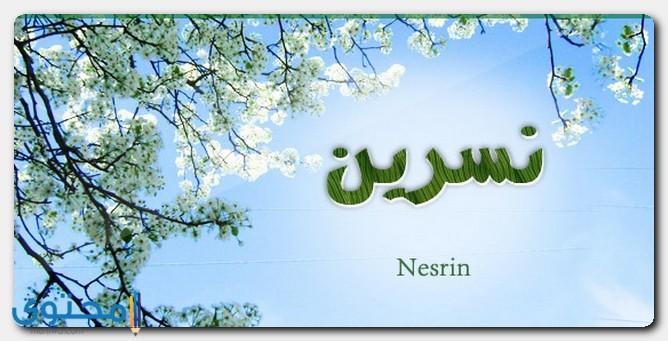اسم نسرين