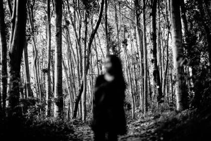 تفسير رؤية الغابة فى المنام بالتفصيل