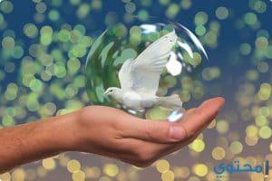 موضوع تعبير عن السلام كامل