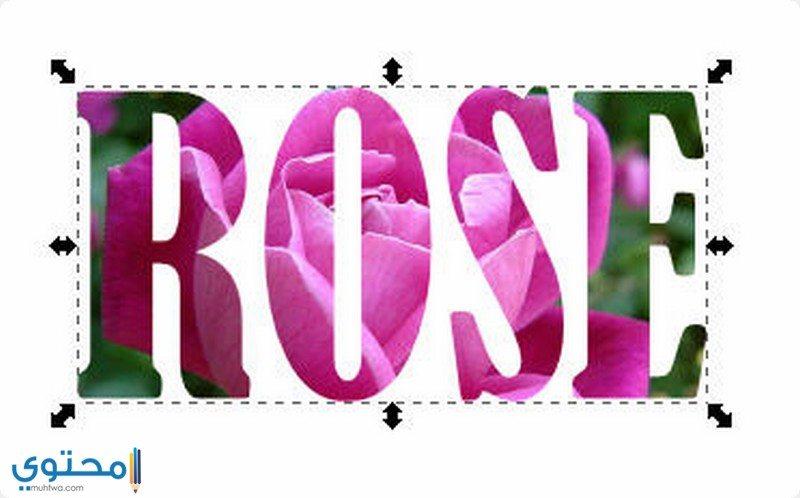 اسم Rose