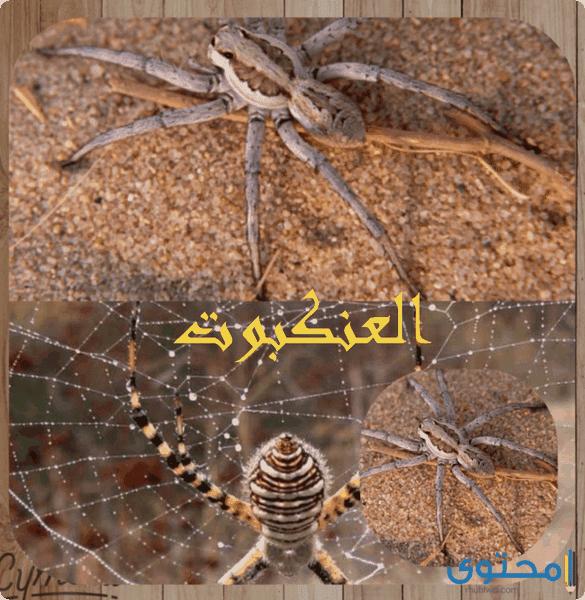 سورة العنكبوت