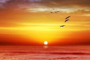 كلمات وعبارات عن جمال الطبيعة جديدة