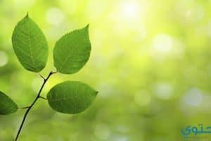 موضوع تعبير عن الطبيعة والأشجار