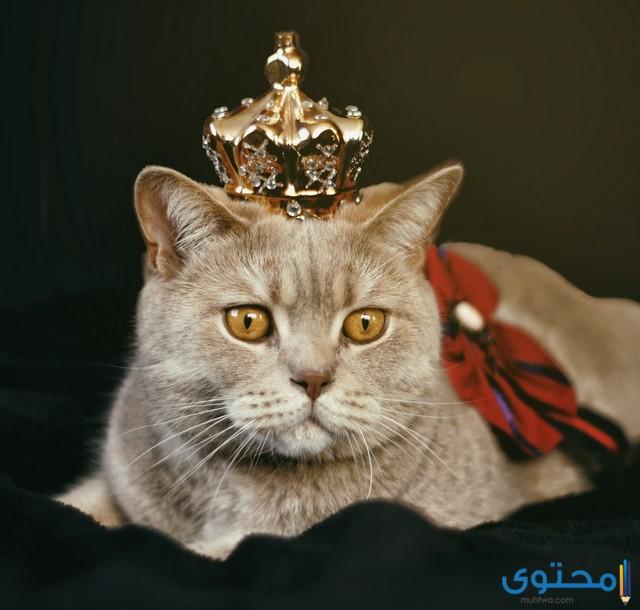 اسماء قطط بالإنجليزي