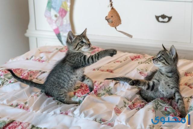 اسماء قطط ذكور تركية