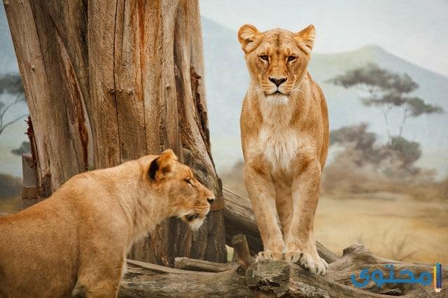 الحيوانات البرية