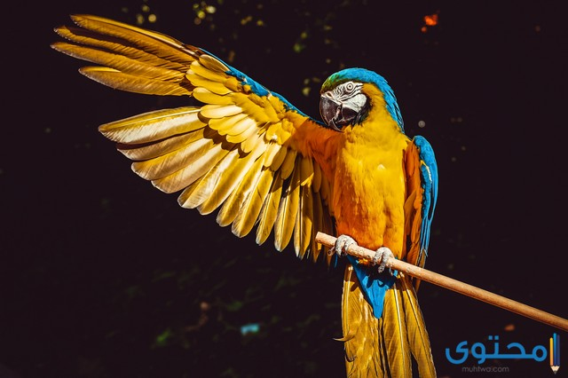 انواع الطيور بالصور واسمائها 2020