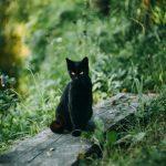 القط فى حلم العزباء والحامل والمتزوجة وتفسيره عند إبن سيرين