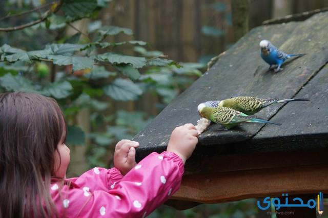 اسماء طيور للاطفال 2020