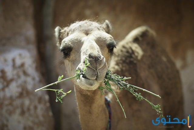 الحيوانات آكلة النباتات